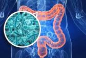 """百植健康·BZ11复合益生菌:与""""菌""""相伴,""""肠""""乐一生!"""